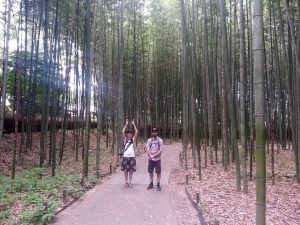Bamboo is very tall