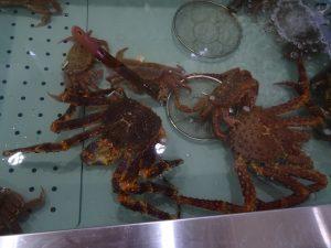 Araignées de mer