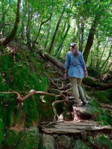Forêt incroyable