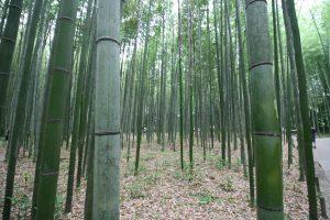 bambooooo