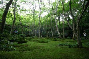 Un des temples autour de la forêt de bamboo